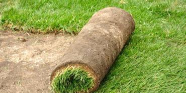 new turf