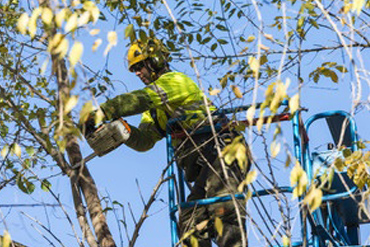 tree-pruning-a