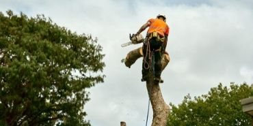 Arborist cutting tree, action shot