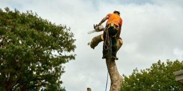 Arborist cutting tree, action shot