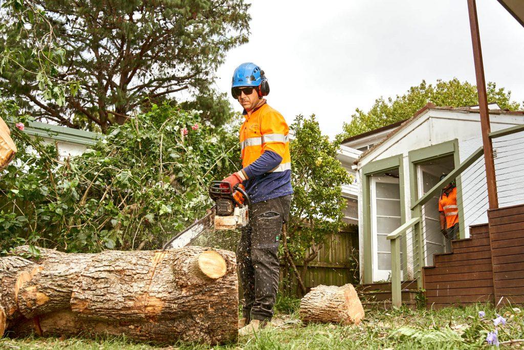Tree Lopping in Sydney
