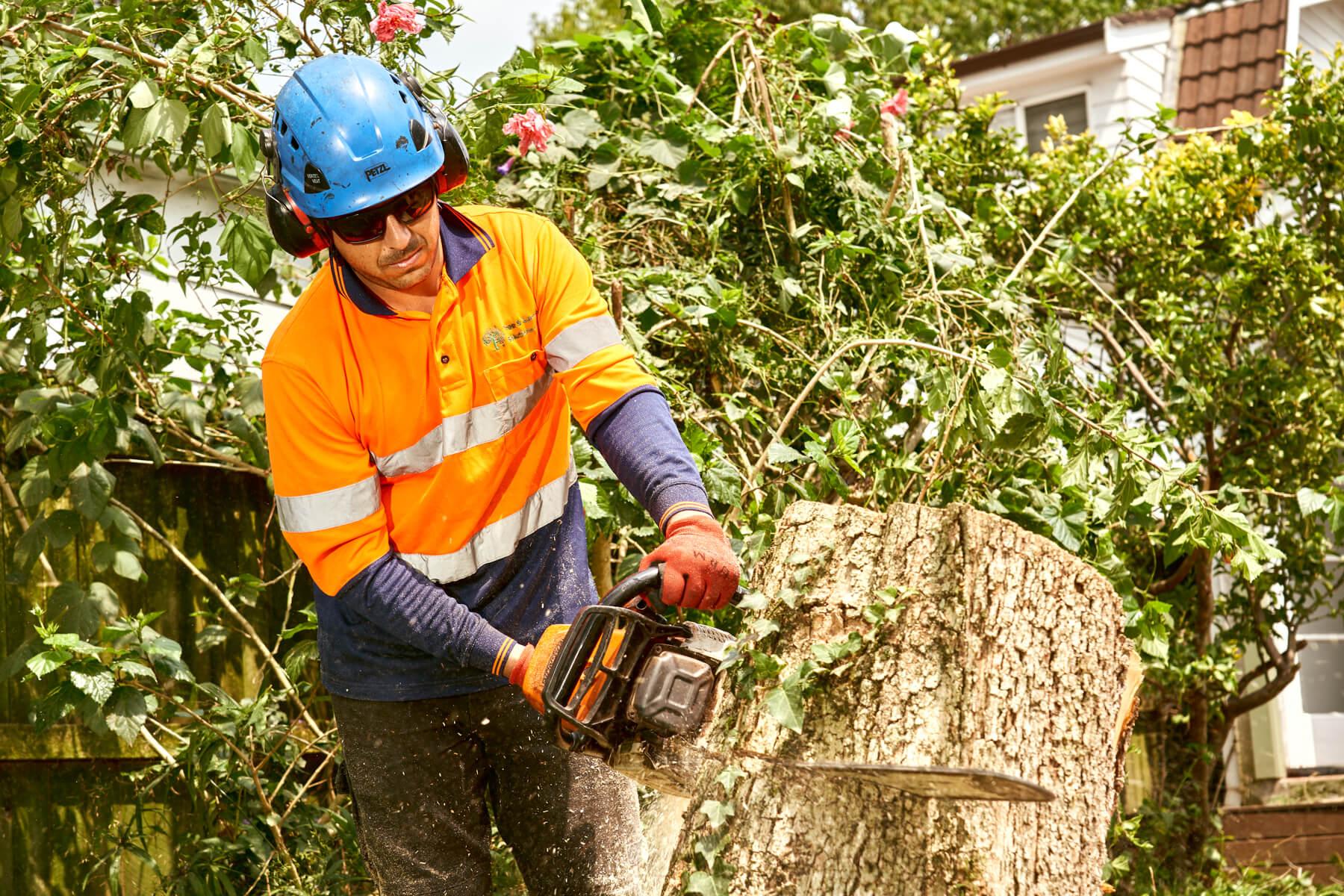 Tree Cutting in Sydney